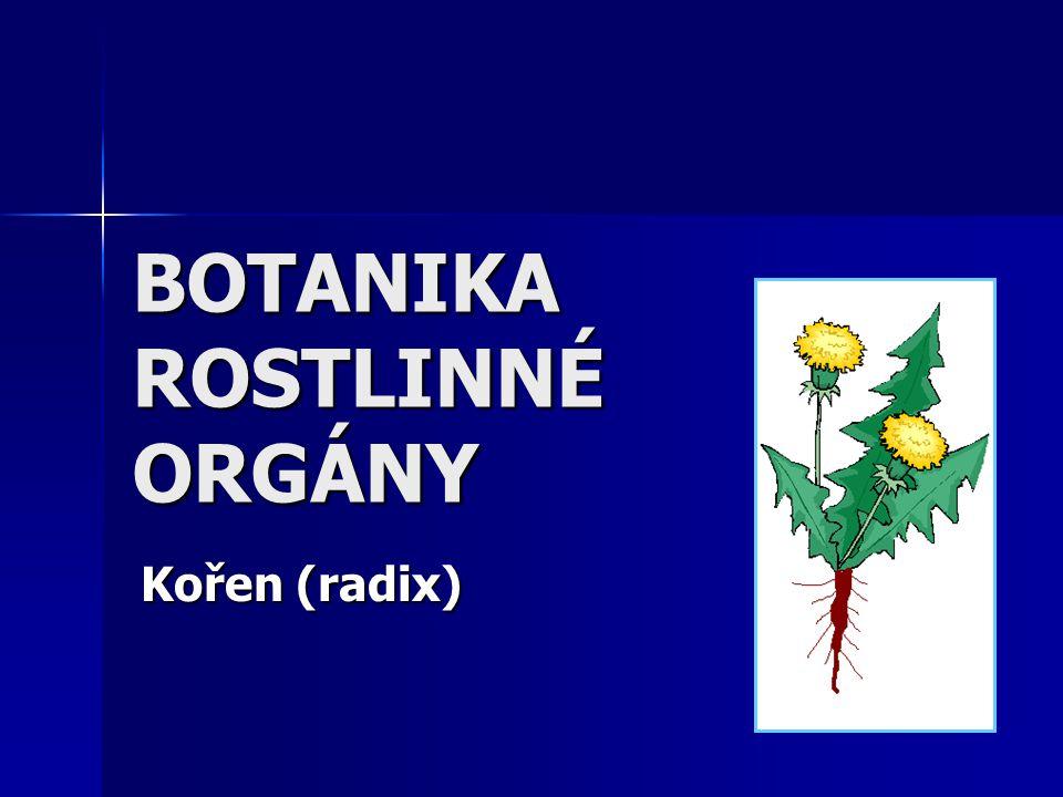 BOTANIKA ROSTLINNÉ ORGÁNY