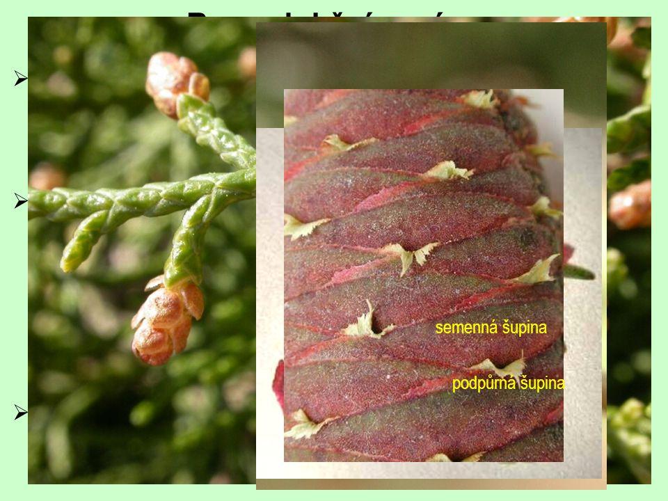Reprodukční orgány samčí samičí opylení jednoduché