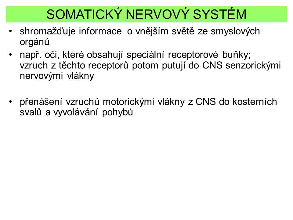 SOMATICKÝ NERVOVÝ SYSTÉM