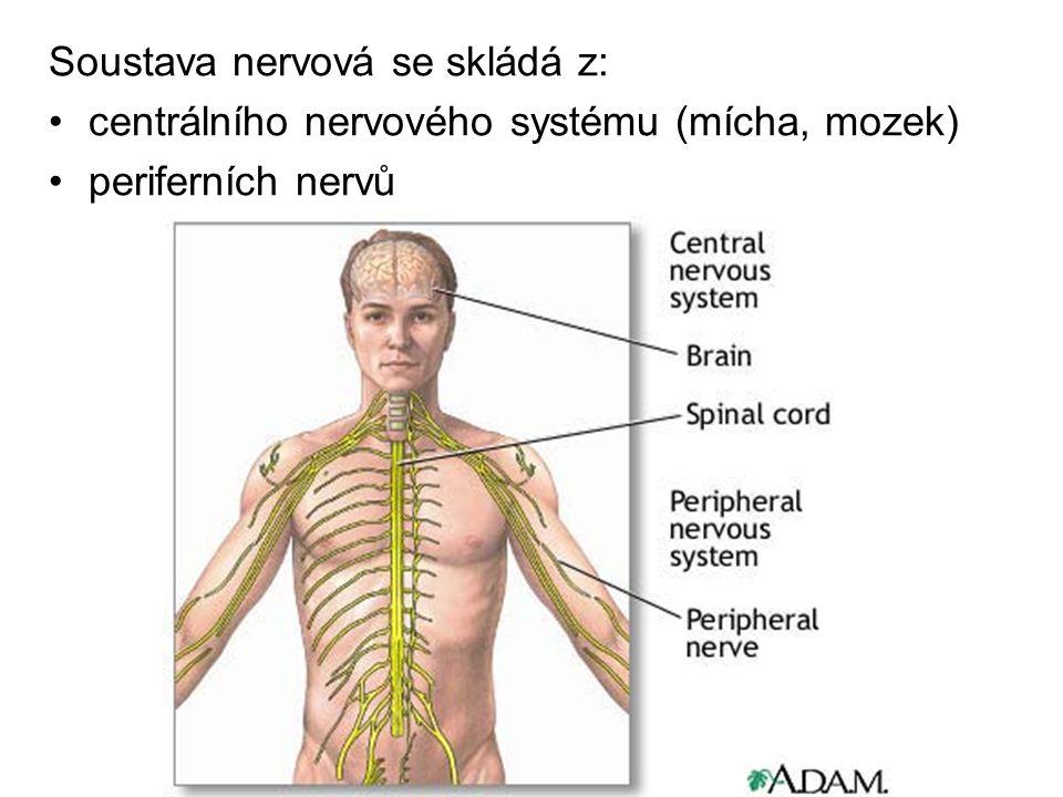 Soustava nervová se skládá z: