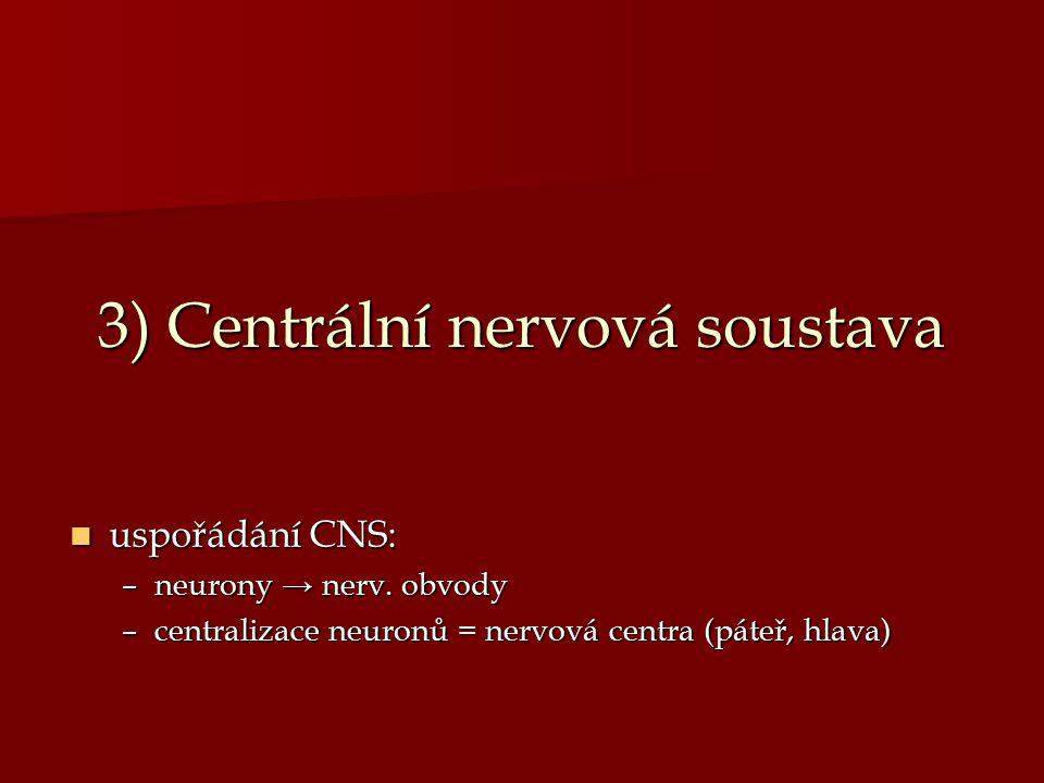 3) Centrální nervová soustava