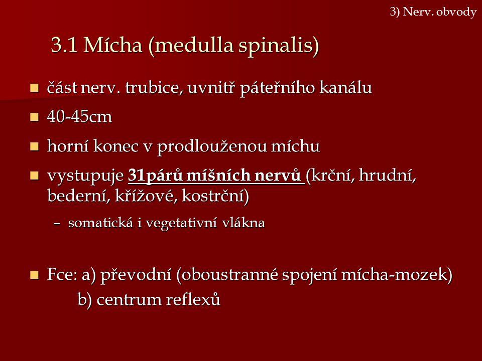 3.1 Mícha (medulla spinalis)