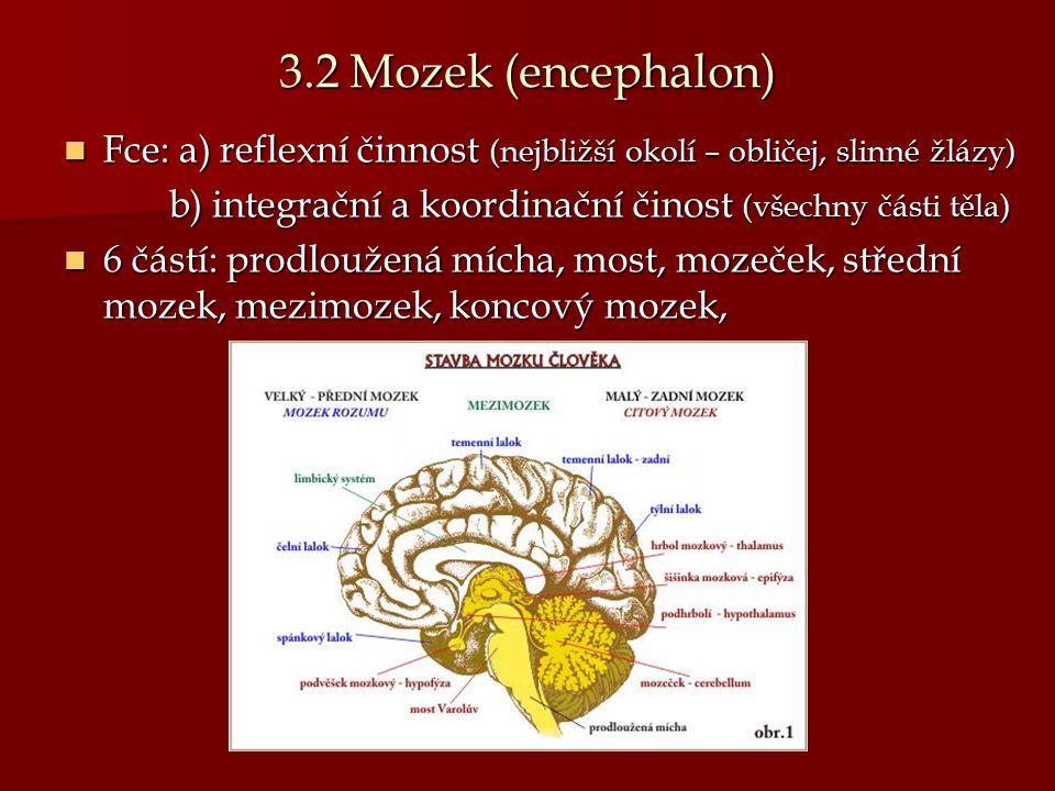 3.2 Mozek (encephalon) Fce: a) reflexní činnost (nejbližší okolí – obličej, slinné žlázy) b) integrační a koordinační činost (všechny části těla)