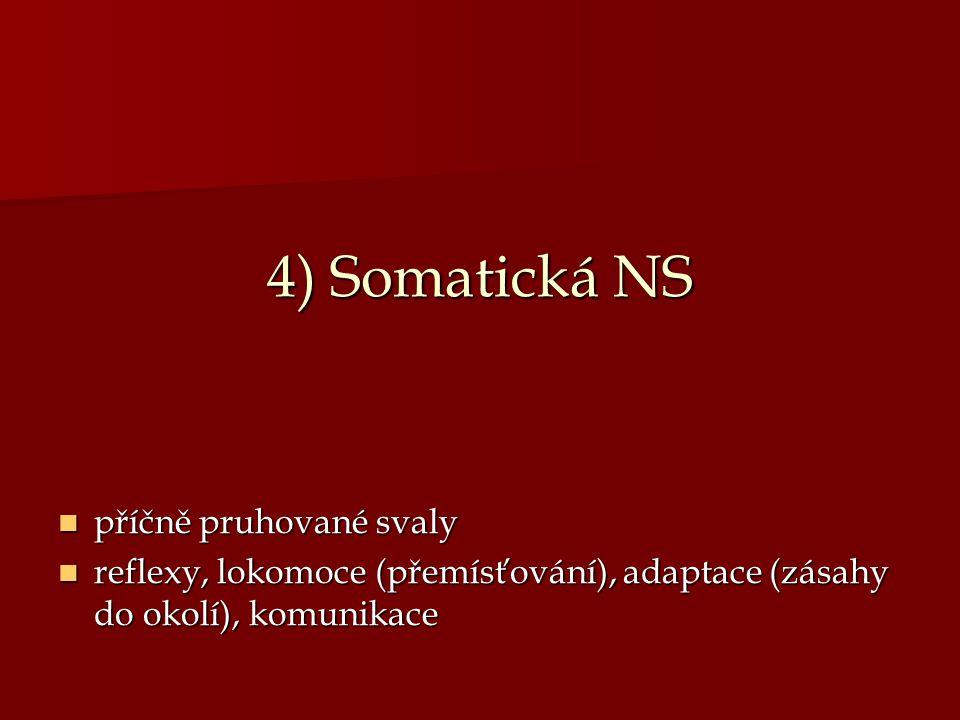 4) Somatická NS příčně pruhované svaly