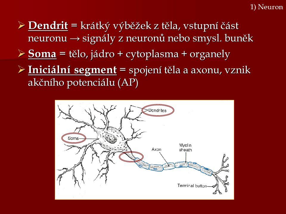 Soma = tělo, jádro + cytoplasma + organely