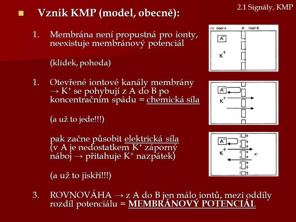 Vznik KMP (model, obecně):
