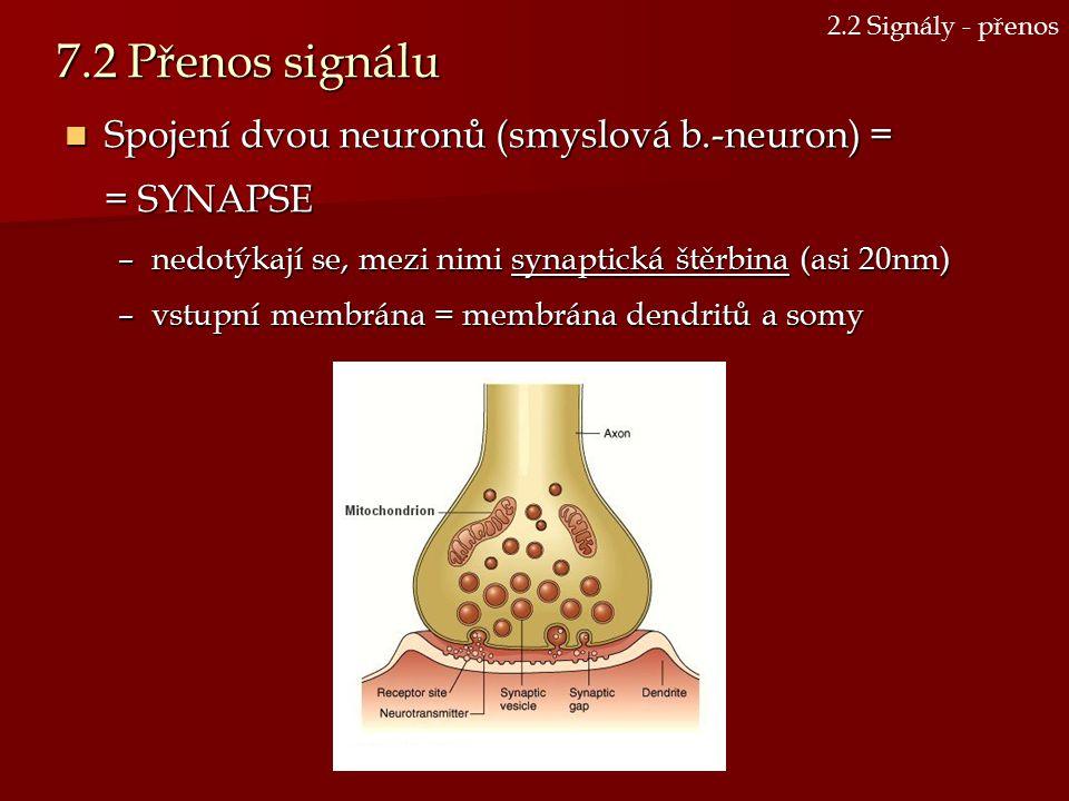 7.2 Přenos signálu Spojení dvou neuronů (smyslová b.-neuron) =