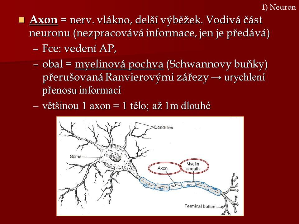 1) Neuron Axon = nerv. vlákno, delší výběžek. Vodivá část neuronu (nezpracovává informace, jen je předává)