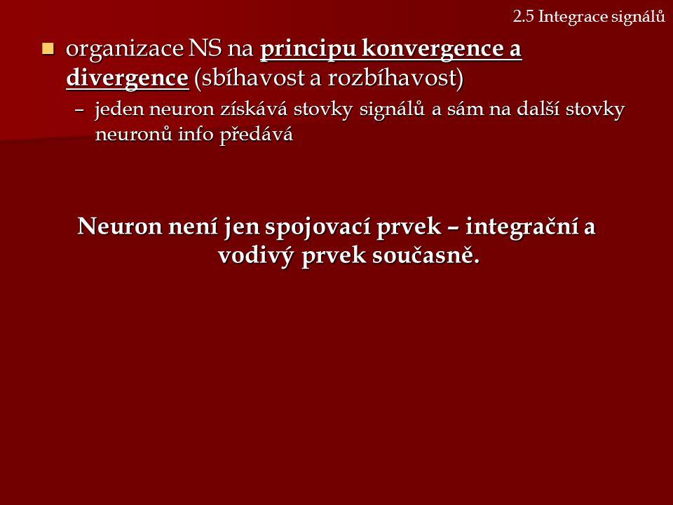 Neuron není jen spojovací prvek – integrační a vodivý prvek současně.