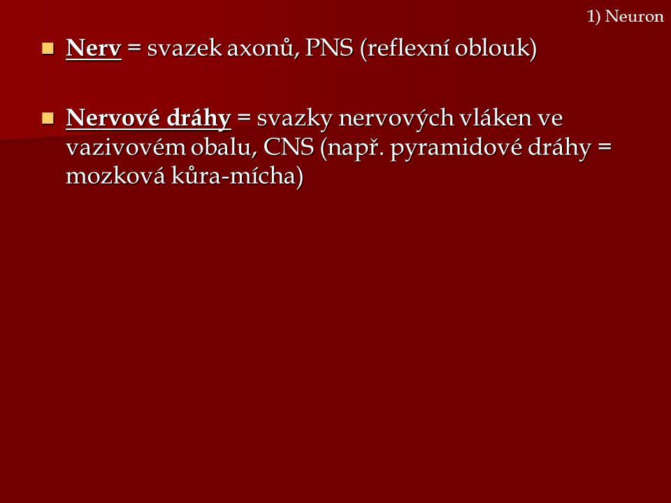 Nerv = svazek axonů, PNS (reflexní oblouk)