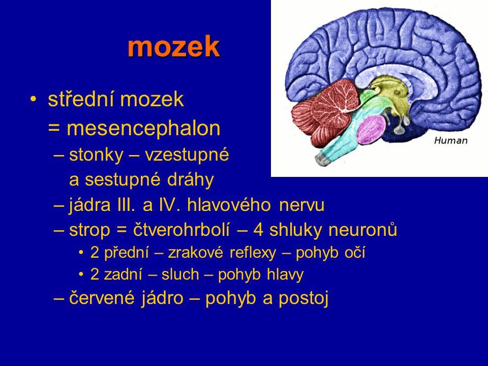 mozek střední mozek = mesencephalon stonky – vzestupné