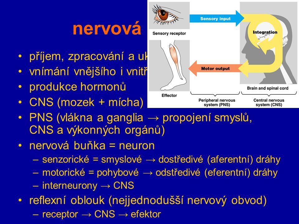 nervová soustava příjem, zpracování a ukládání informací