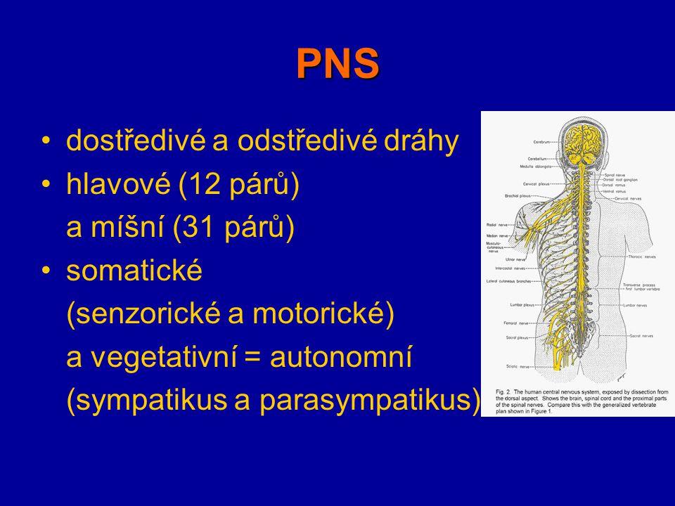 PNS dostředivé a odstředivé dráhy hlavové (12 párů) a míšní (31 párů)