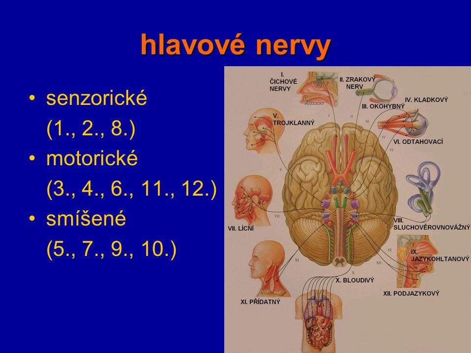 hlavové nervy senzorické (1., 2., 8.) motorické (3., 4., 6., 11., 12.)