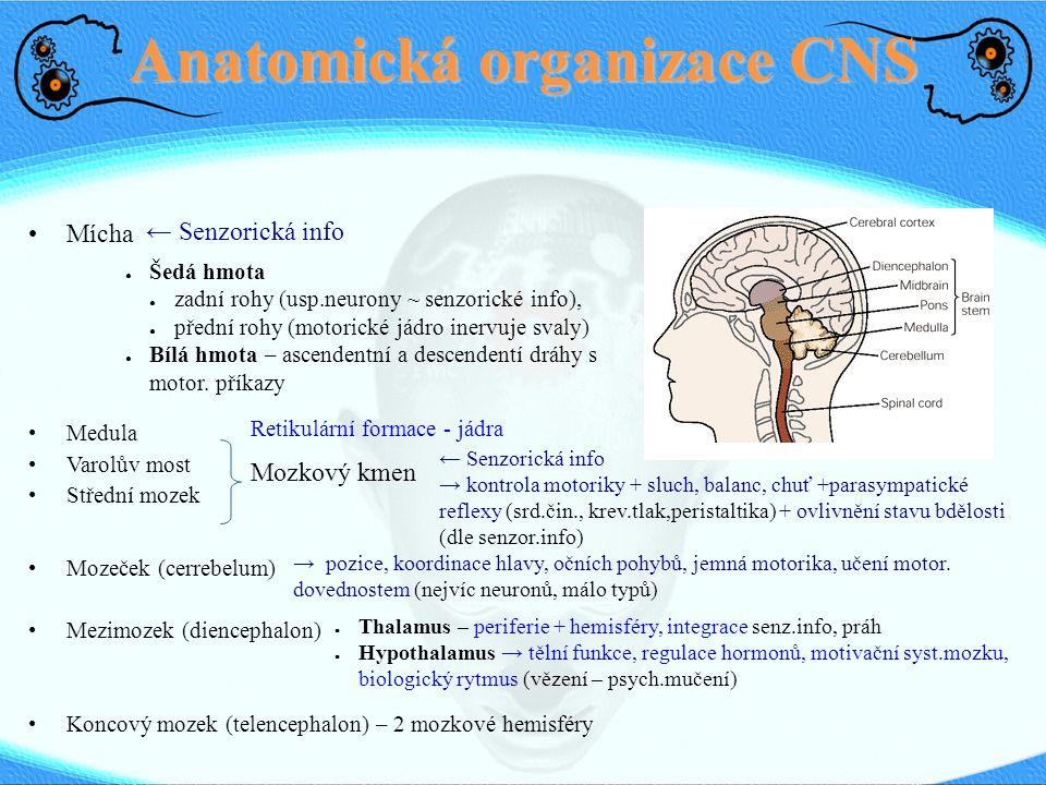 Anatomická organizace CNS