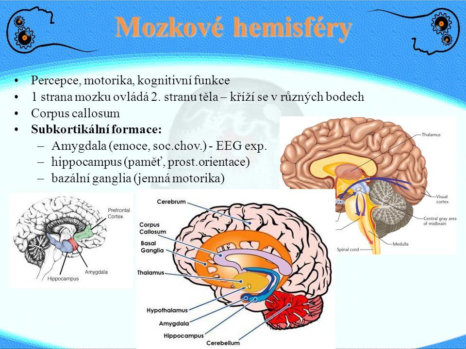 Mozkové hemisféry Percepce, motorika, kognitivní funkce