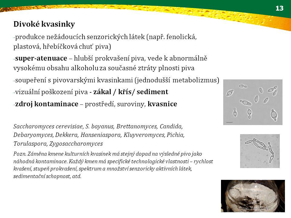 Divoké kvasinky produkce nežádoucích senzorických látek (např. fenolická, plastová, hřebíčková chuť piva)