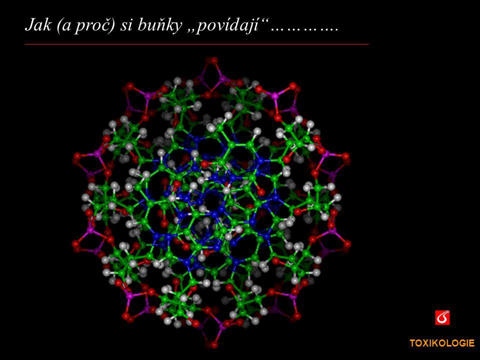 """Jak (a proč) si buňky """"povídají …………."""