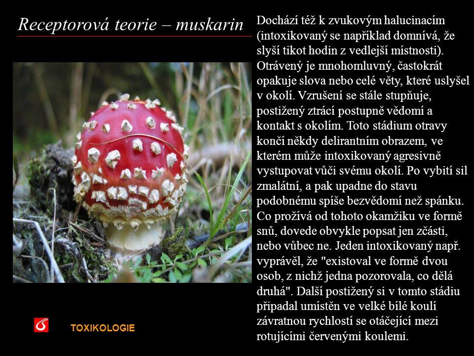 Receptorová teorie – muskarin