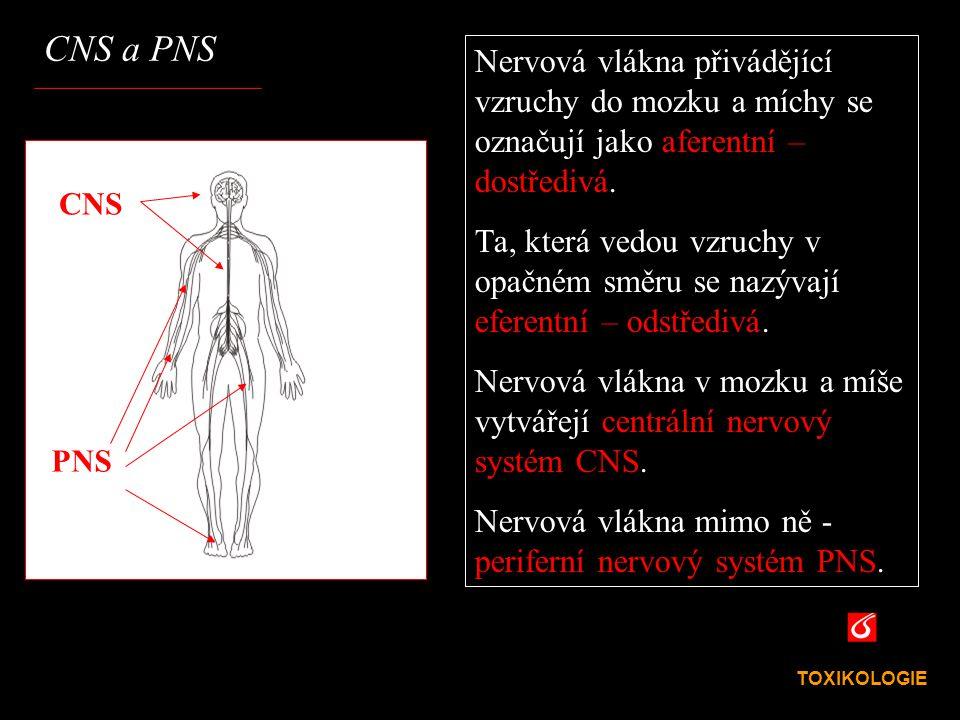 CNS a PNS Nervová vlákna přivádějící vzruchy do mozku a míchy se označují jako aferentní – dostředivá.
