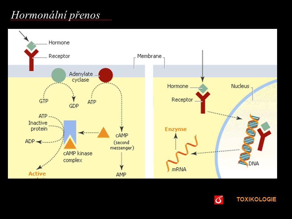 Hormonální přenos VŠCHT Praha TOXIKOLOGIE