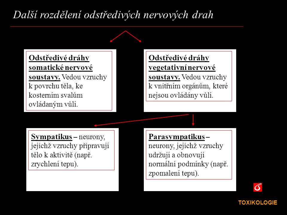 Další rozdělení odstředivých nervových drah