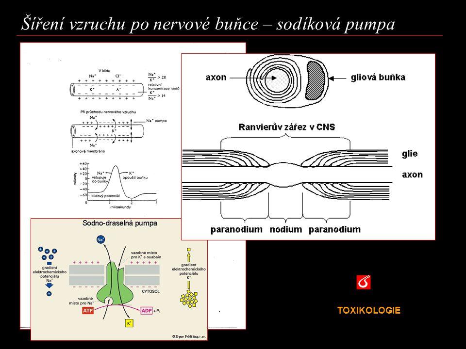 Šíření vzruchu po nervové buňce – sodíková pumpa