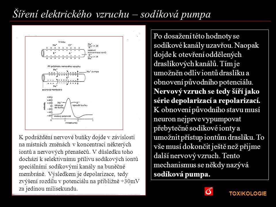 Šíření elektrického vzruchu – sodíková pumpa