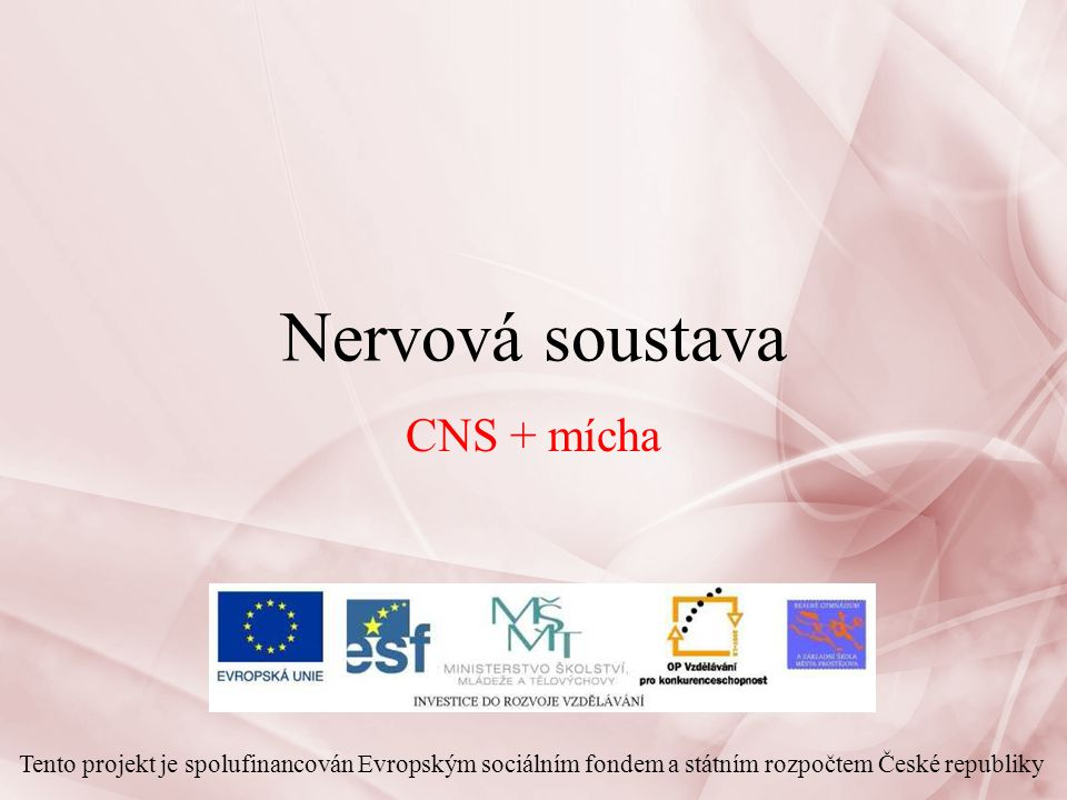 Nervová soustava CNS + mícha