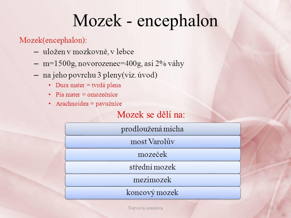 Mozek - encephalon Mozek se dělí na: Mozek(encephalon):