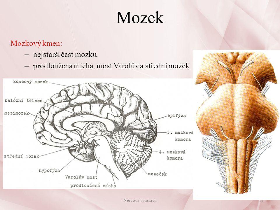 Mozek Mozkový kmen: nejstarší část mozku