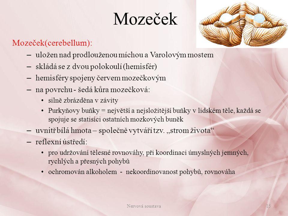 Mozeček Mozeček(cerebellum):