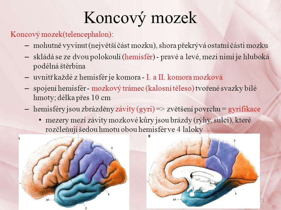 Koncový mozek Koncový mozek(telencephalon):