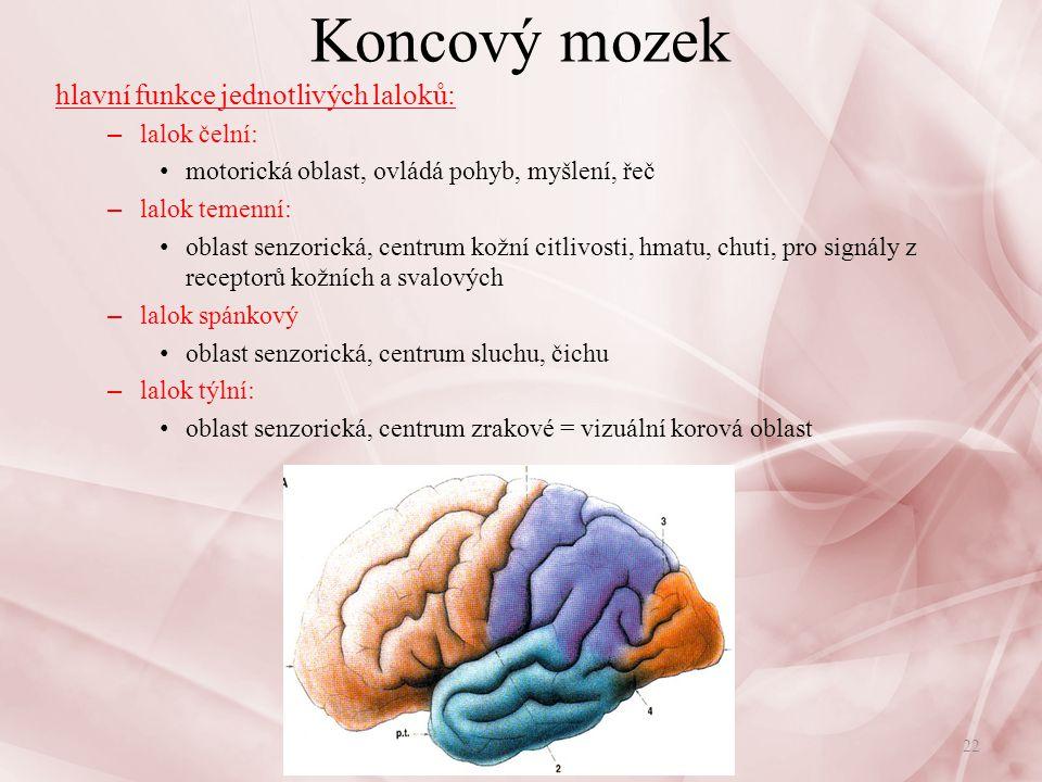 Koncový mozek hlavní funkce jednotlivých laloků: lalok čelní:
