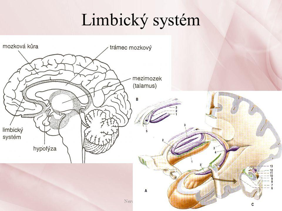 Limbický systém Nervová soustava