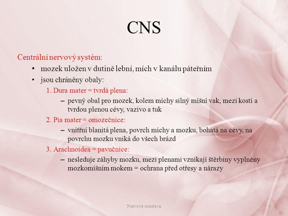 CNS Centrální nervový systém: