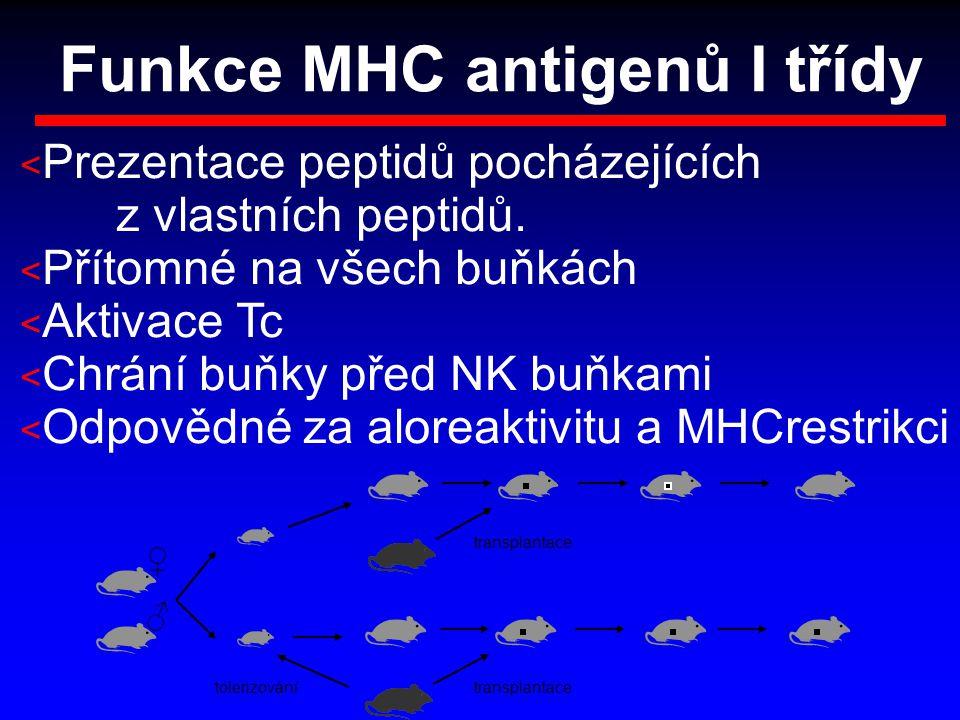 Funkce MHC antigenů I třídy