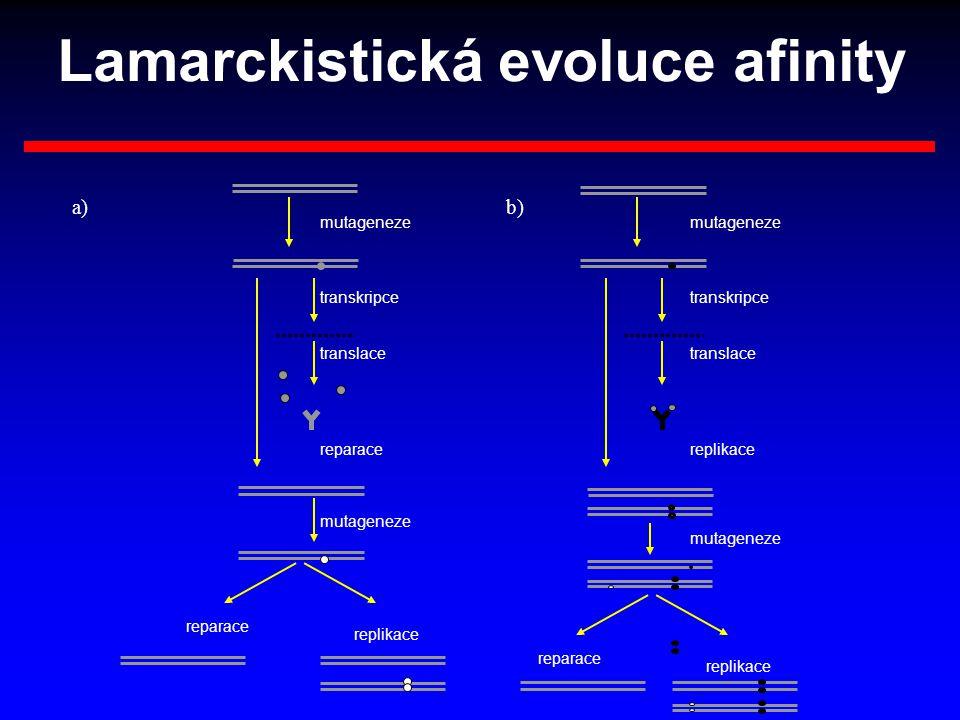 Lamarckistická evoluce afinity