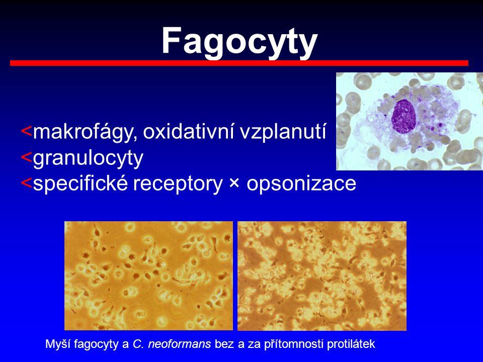 Fagocyty <makrofágy, oxidativní vzplanutí <granulocyty