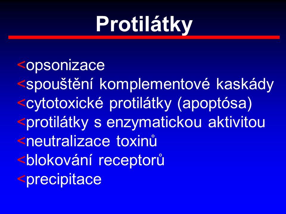 Protilátky <opsonizace <spouštění komplementové kaskády