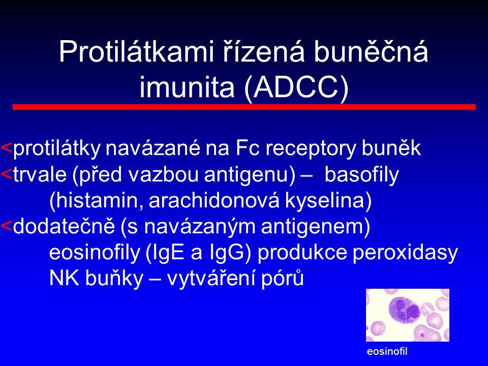 Protilátkami řízená buněčná imunita (ADCC)