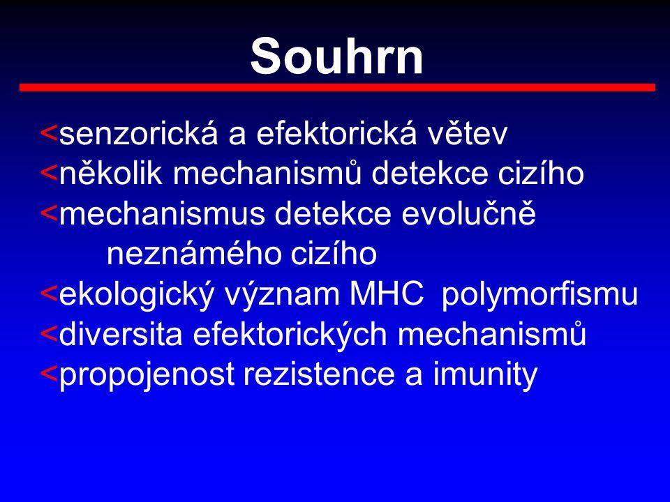 Souhrn <senzorická a efektorická větev