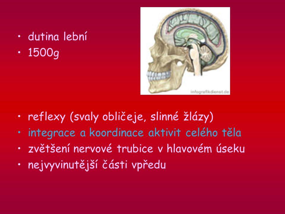dutina lební 1500g. reflexy (svaly obličeje, slinné žlázy) integrace a koordinace aktivit celého těla.