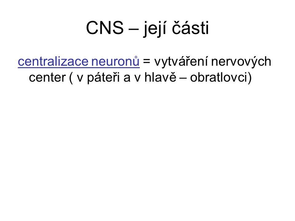 CNS – její části centralizace neuronů = vytváření nervových center ( v páteři a v hlavě – obratlovci)