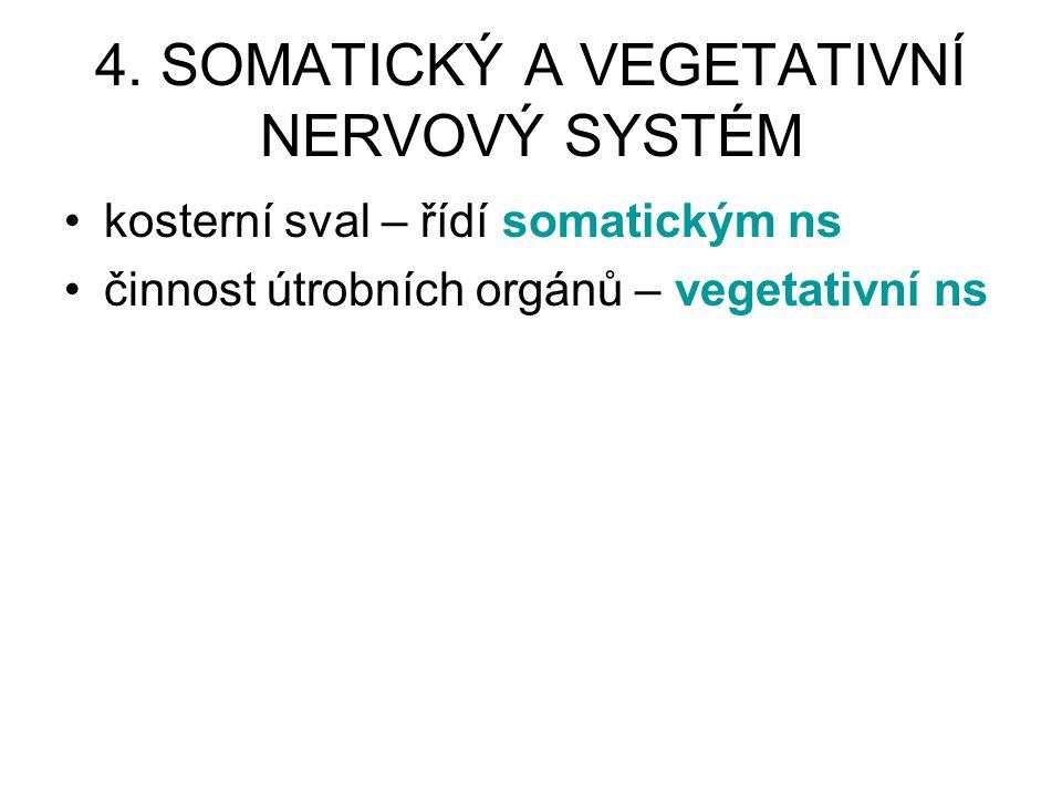 4. SOMATICKÝ A VEGETATIVNÍ NERVOVÝ SYSTÉM