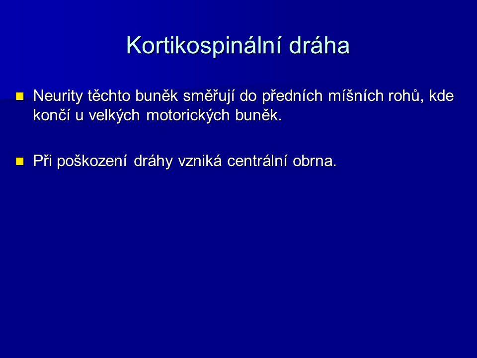 Kortikospinální dráha