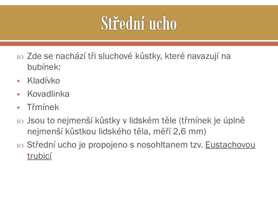 Střední ucho Zde se nachází tři sluchové kůstky, které navazují na bubínek: Kladívko. Kovadlinka.