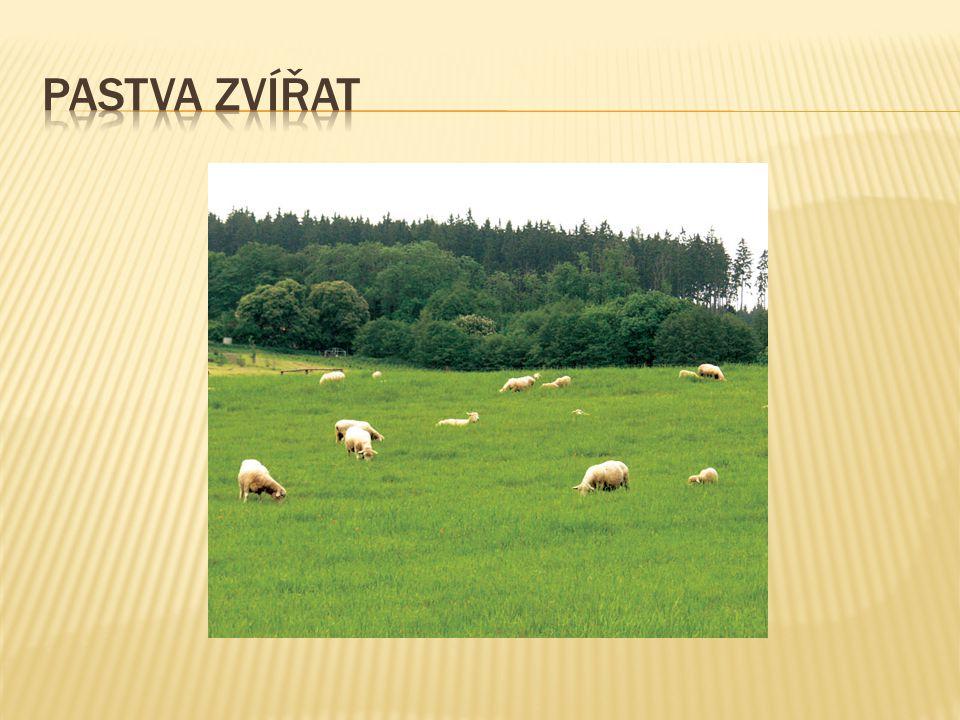 Pastva zvířat