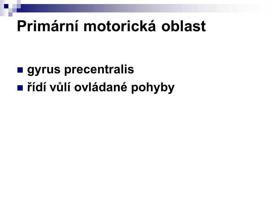 Primární motorická oblast