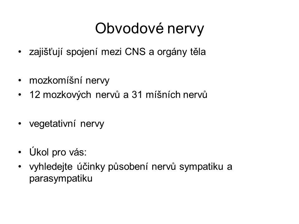 Obvodové nervy zajišťují spojení mezi CNS a orgány těla